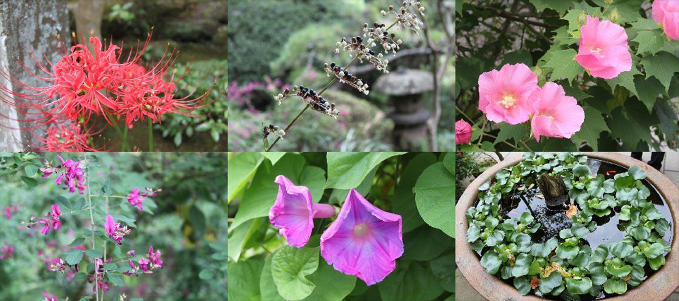 お花8_R